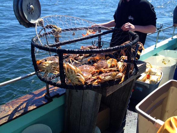 Crab_pot